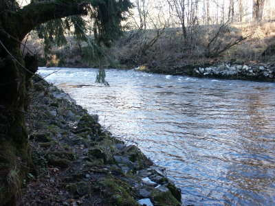 Puget sound anglers state board for Chehalis river fishing